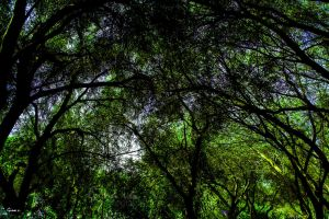 Hiding in the shadows of nature by ginavd