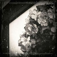 The secret language of flowers... by ansdesign