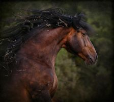 Crazy Horse by Marndi