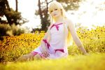 Monogatari - Amber Light by aco-rea