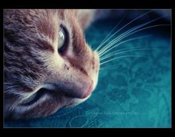 J'aime le Turquoise II by Xx-Channel-xX
