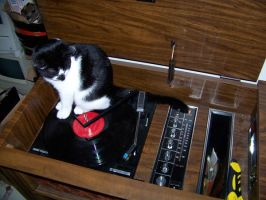 Jack on my console stereo by canadianman000