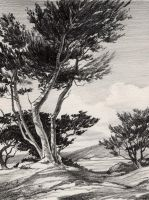 Carmel Cypress - pencil by David-McCamant