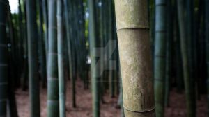 Bamboo II by burningmonk