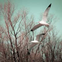 Fly Away by CHabio