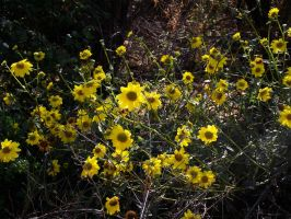 wild flower stock 06 by hp-abrasion