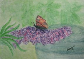 Lilac Butterfly by KMAP3156