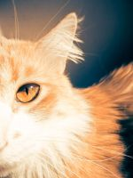 cat picture by avip-dee
