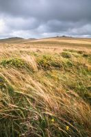 Dartmoor Wind by adamlack