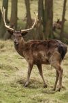 Deer Stock 12 by Malleni-Stock