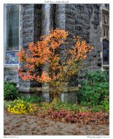 Fall Tree and the Church by yellowcaseartist