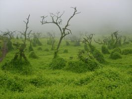 Green Nature Fog Weather by ComedyNeutral