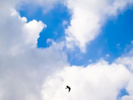 Summer - Soaring in the Clouds by samnouvelle