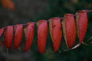 Red leaves 2 by Risandell
