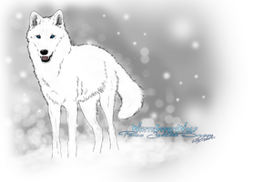 .::Pure.White.Snow.Wolf::. by WhiteSpiritWolf