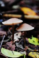 couple big mushroom by FMpicturs