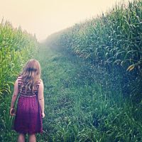Looking in to the Corn by sej