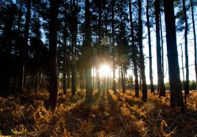 Woodland Early Morning by davepphotographer