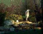 The Heron by mick-y