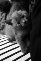 Baby Russian Blue by grunge-dadada