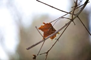 last leaf standing... by Latitude1979
