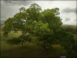 The Grand Old Tree by Estruda