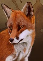 Fox Portrait by petanimalia