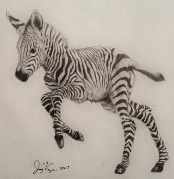 Hear Hoofbeats/Think Zebras by jvaughn789