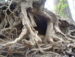 Roots Stock 3 by hematine-stock
