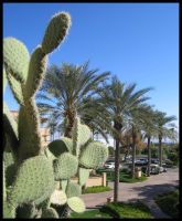 Cactus Of The Palms by BlueArctic4