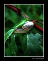 Invisible snail by gwendeline