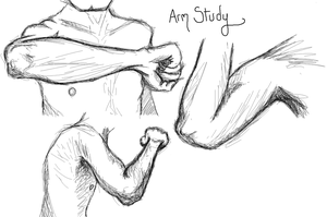 Arm Study by SometimesDrawings