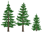 Pine Trees by tyke44060