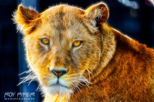 Sophie The Lioness: Fractalius Re-Edit by nerdboy69