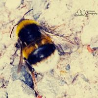 Bumble Bumble by MouseMakesMess