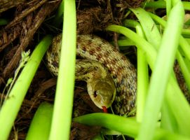 Garter Snake by StormPetral0509
