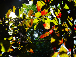 Multicolored Leaves -1- by IoannisCleary