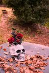 Skulls And Roses by Camerastry
