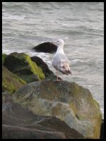 Seagull by Wickedly-Witchy