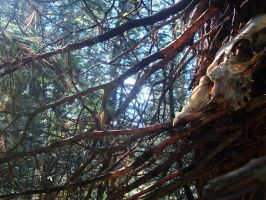 deep in the forest (the skull on the tree) by iondissonant