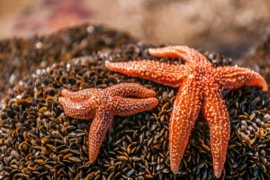 Starfish by Tetelle-passion