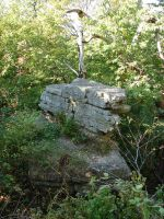 Rocky Forest Background 07 by FantasyStock