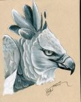 Harpy Eagle by LarkoftheRiver