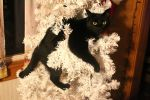 Crazy Christmas Cat! by 0124nathan