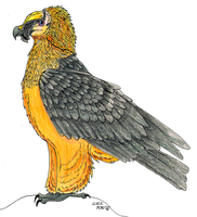 Bearded Vulture by TornFeathers