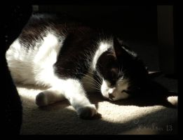 FIRST SUNSPOT DAY OF THE YEAR by Loulou13
