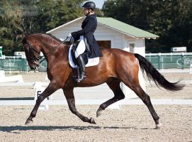 National Dressage and Jumping_127 by CalyHoney