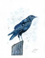 Crow by Sparkleno