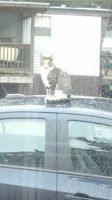 sissy cat on are car 1 by dropchrissy