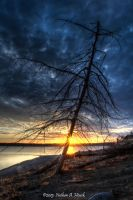 Sunset at the reservoir with a dead tree by abstractcamera